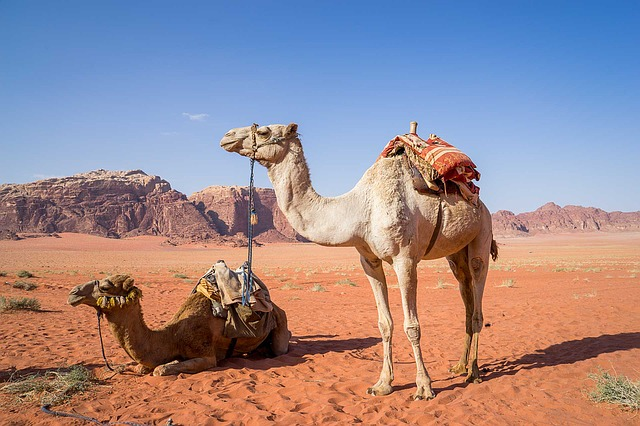 Klimaat_jordanië_Kamelen_Woestijn_Reiseditie
