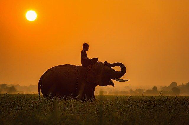 Tanzanie_man_rijdt_op_vrolijke_olifant